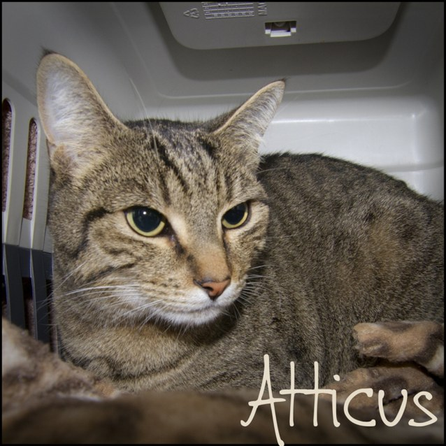 Photo of Atticus