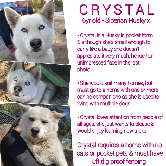 Photo of ❤🐾Crystal🐾❤