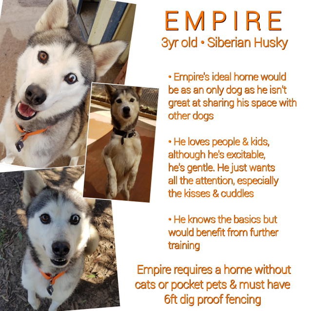 Photo of ❤🐾Empire🐾❤