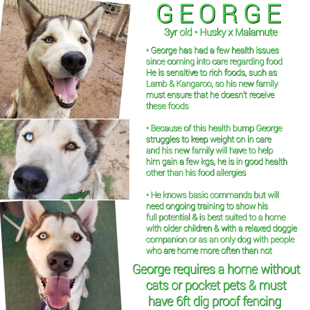 Photo of ❤🐾George🐾❤