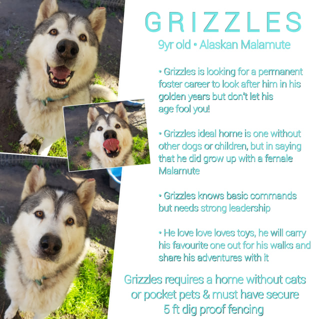Photo of ❤🐾Grizzles 🐾❤