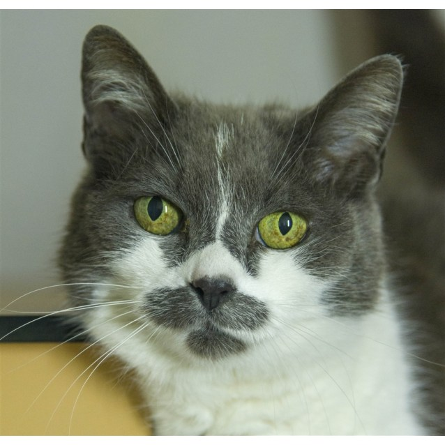 Photo of Tia