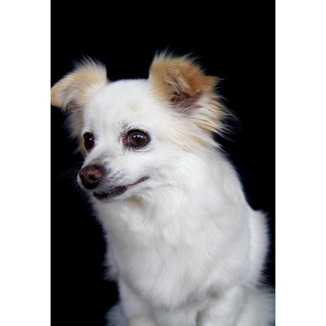 Photo of Chardy