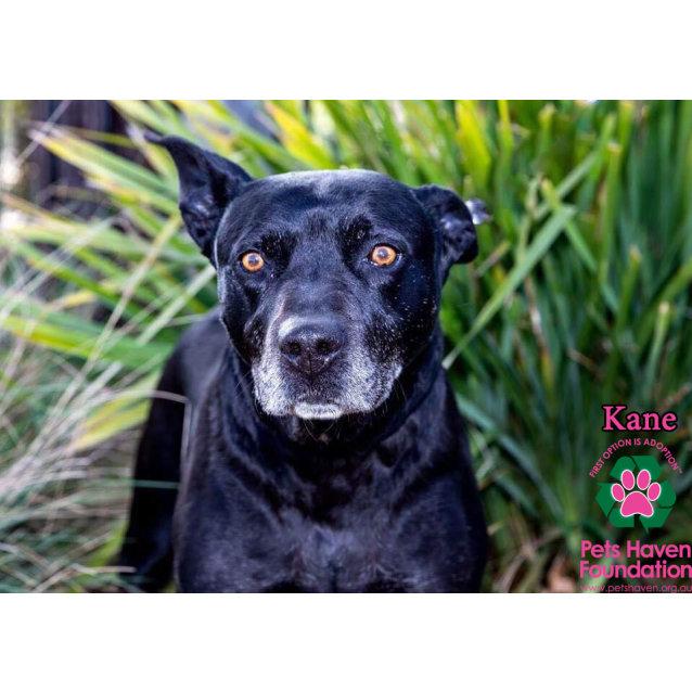 Photo of Kane