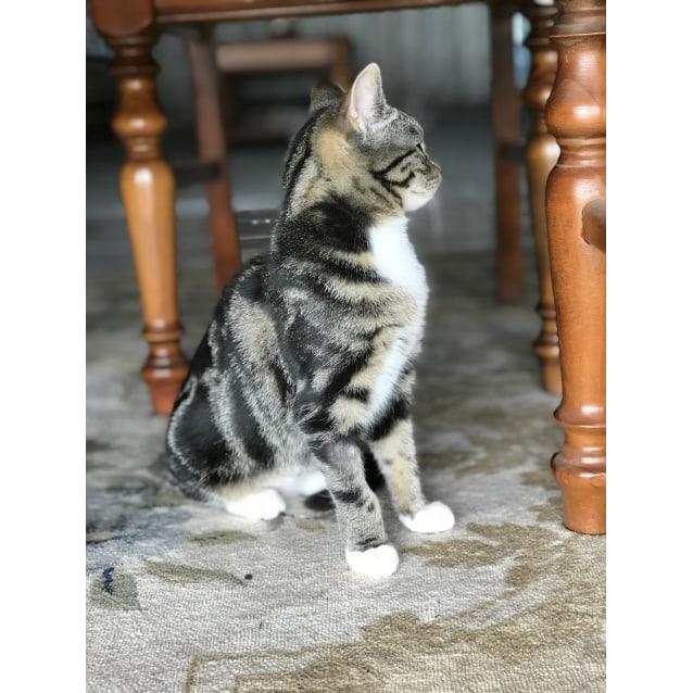 Photo of Thelma   Adoption Fee Reduced