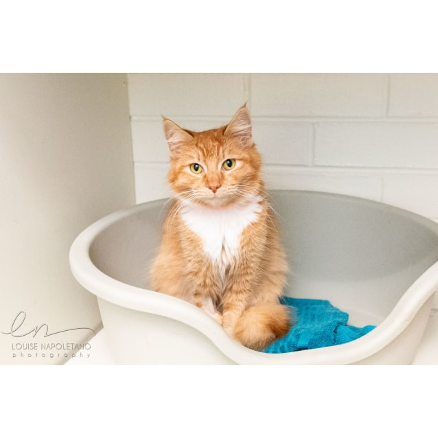 Photo of Caramel (3410)