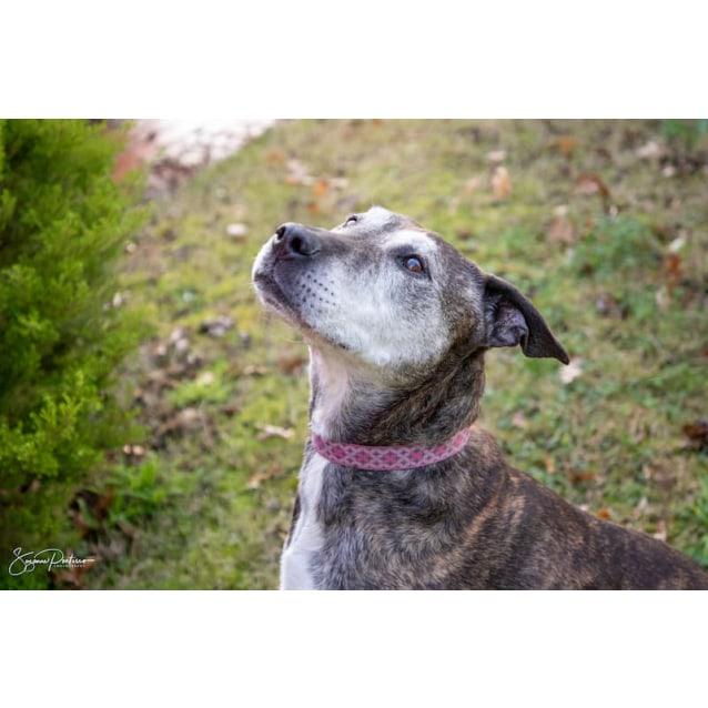 Photo of Misty