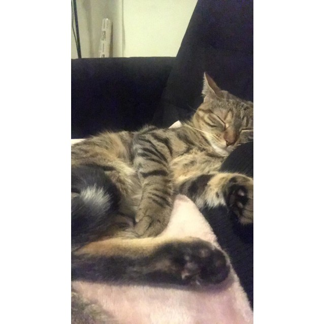 Photo of Sparky (Located In South Yarra)