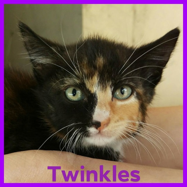 Photo of Twinkles