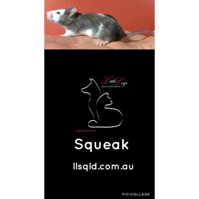 Photo of Squeak