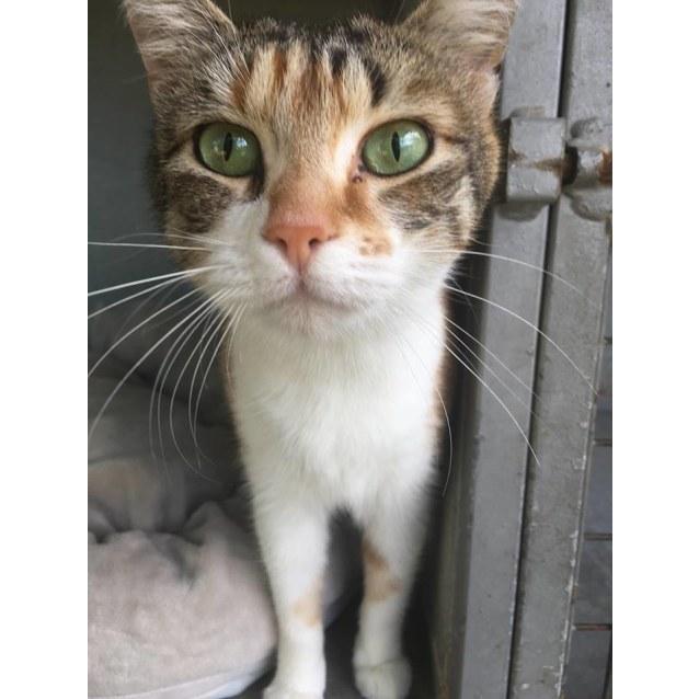 Photo of Missy (Ca V18 163)