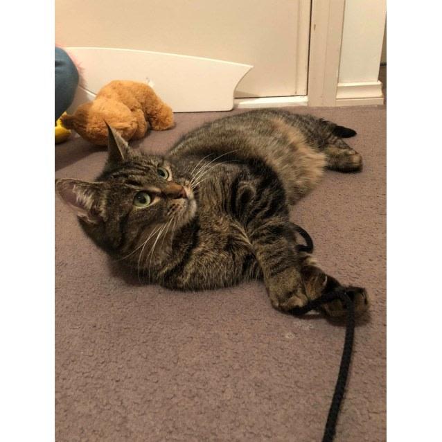 Photo of Pebbles   Meet Me At Cat Lounge   Neko Hq Preston