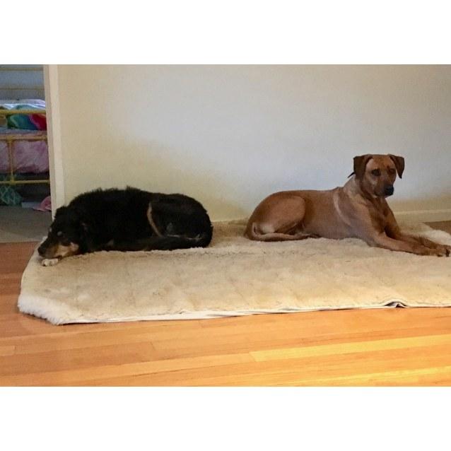 Photo of Bentley (&  Chloe)