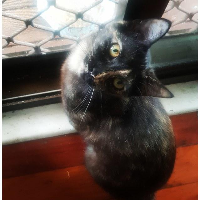 Photo of Muffin