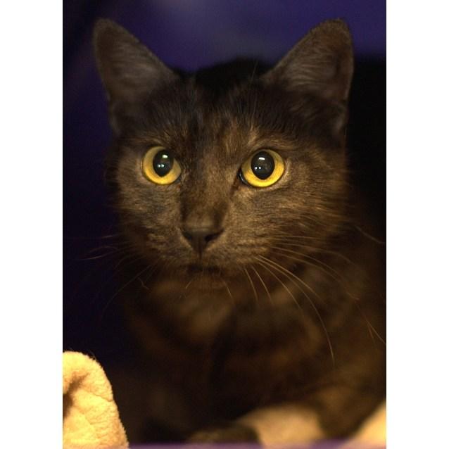 Photo of Olympia