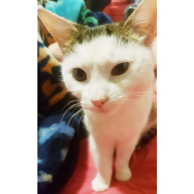 Photo of Minnie   Located In Westmeadows