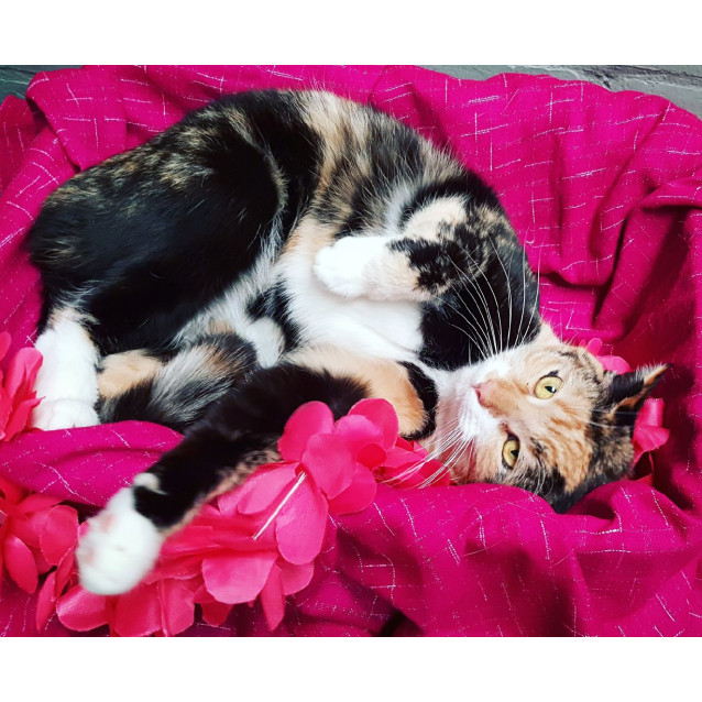 Photo of Kit Kardashion