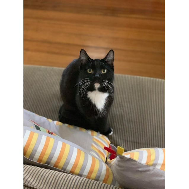 Photo of Charlie (Located In Caulfield North)