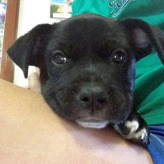 Photo of Fonzi D3975   Adoption Pending