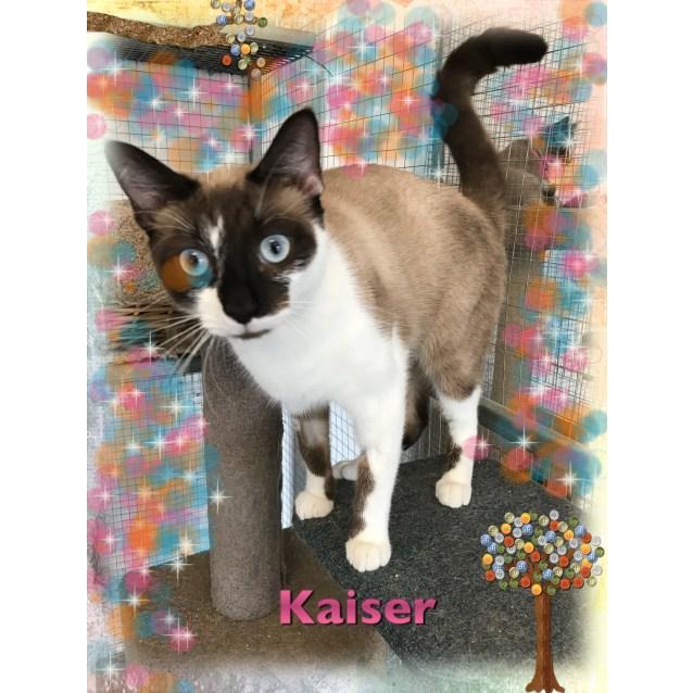 Photo of Kaiser