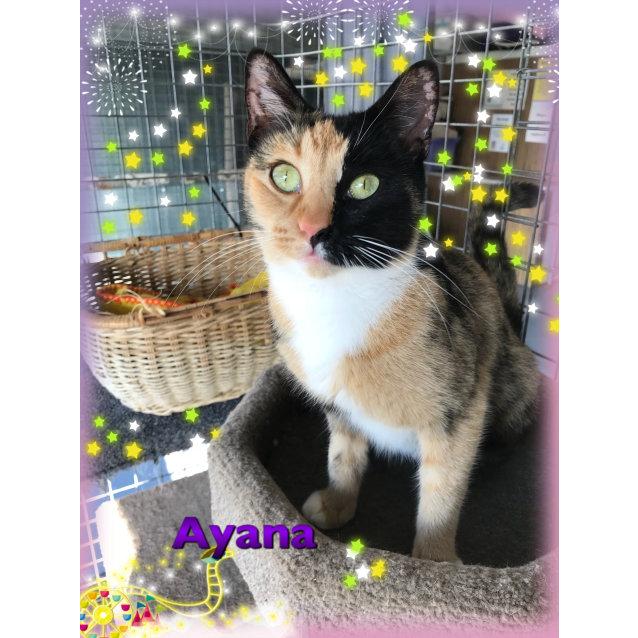 Photo of Ayana