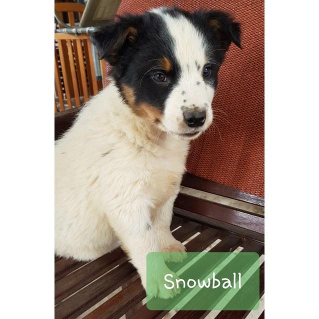 Photo of Snowball
