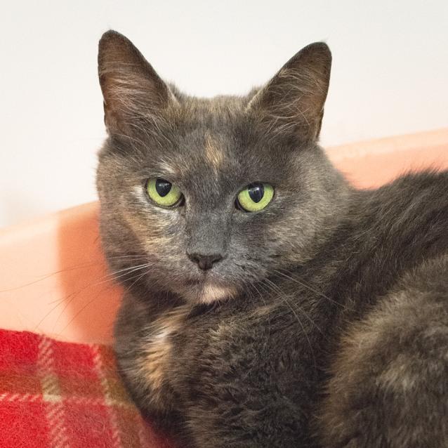 Photo of Puss Puss (89823)