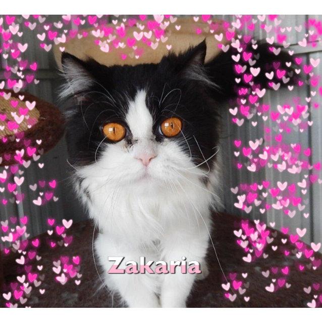 Photo of Zakaria