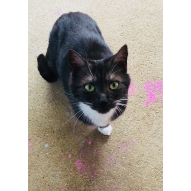 Photo of Petal Is Looking For A Quiet Foster Or Forever Hom