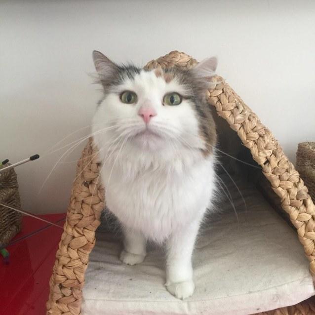 Photo of Fifi   Meet Me At Cat Lounge  Neko Hq Preston