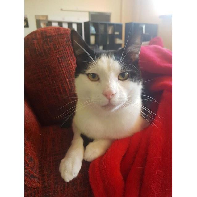 Photo of Edward/Ed   Meet Me At Cat Lounge  Neko Hq Preston