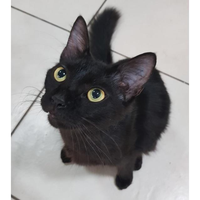 Photo of Twiggy