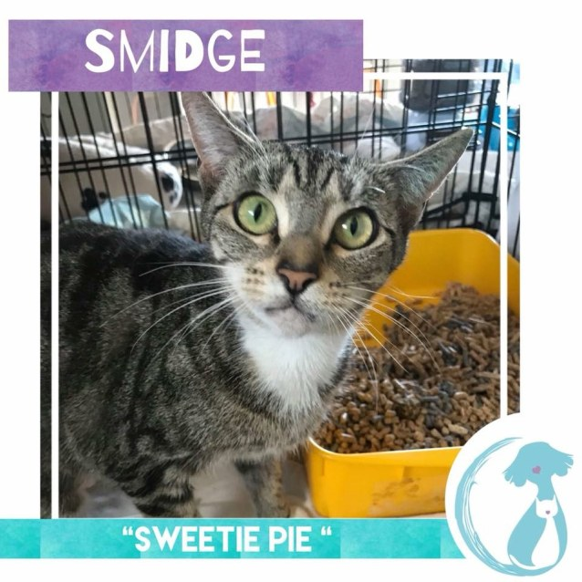 Photo of Smidge