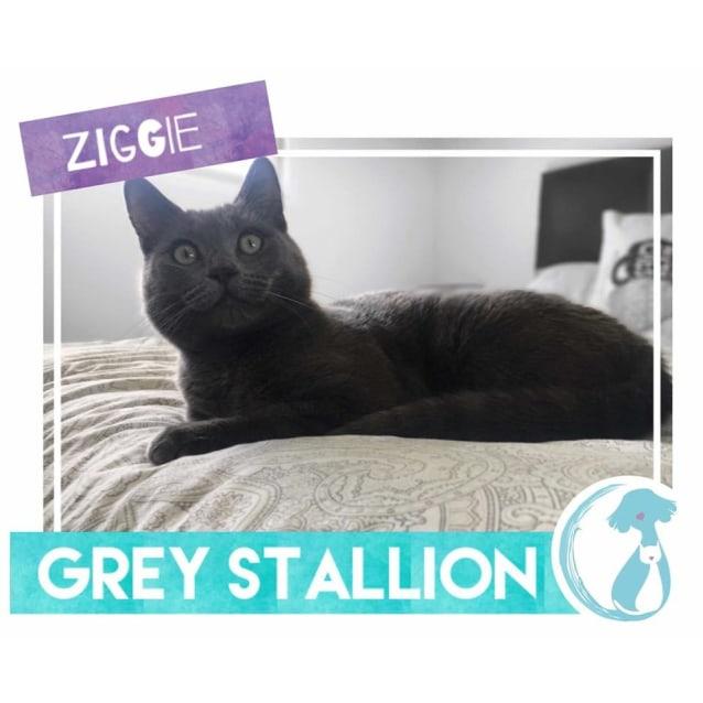 Photo of Ziggie