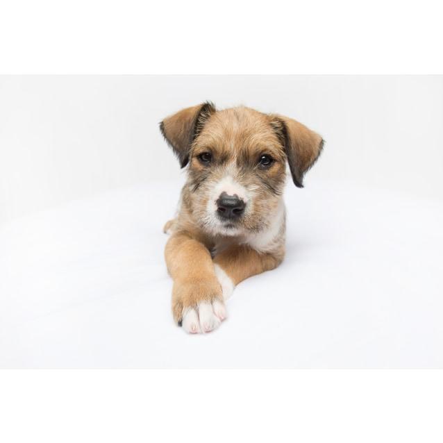 Photo of Sherry ~ Adoption Pending ~