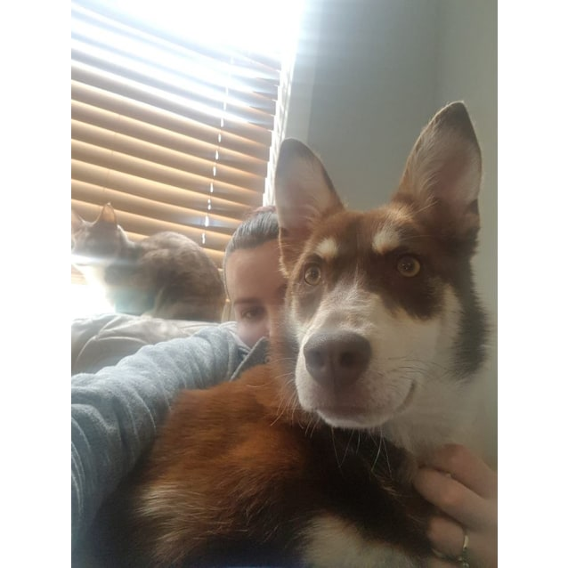 Photo of Izzy ~ 6 Month Old Kelpie X (On Trial 19/10/18)