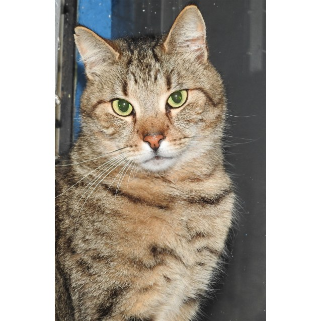 Photo of Minika