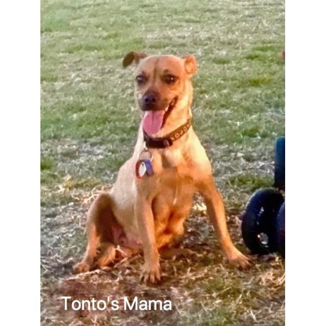 Photo of Tonto D3982