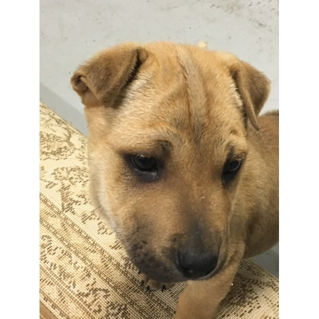Photo of Mikey ** One Of Two Puppies **