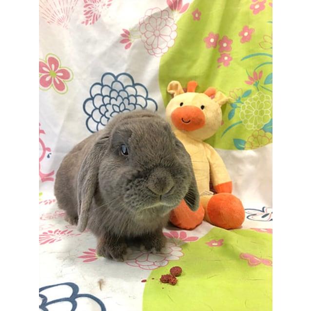 Photo of Alun (Vib)