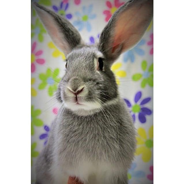 Photo of Stella (Vib)