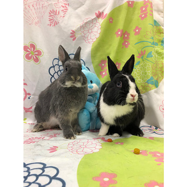 Photo of Sushi And Fuzzball