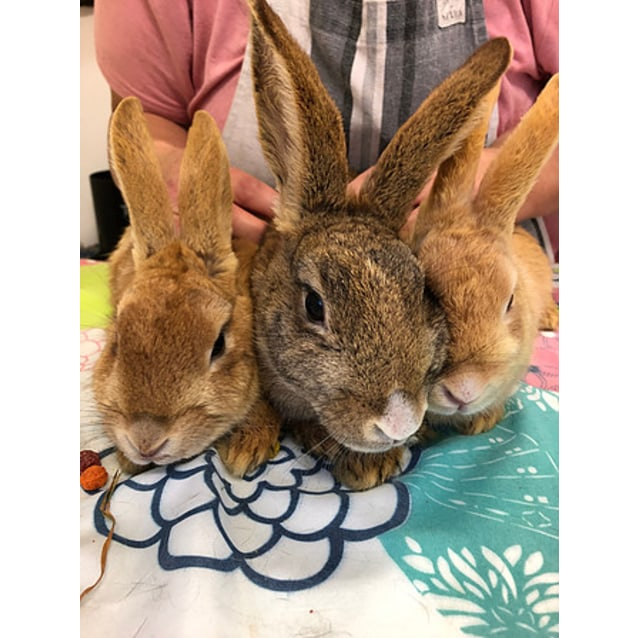 Photo of Rosaleen, Maple & Nutmeg