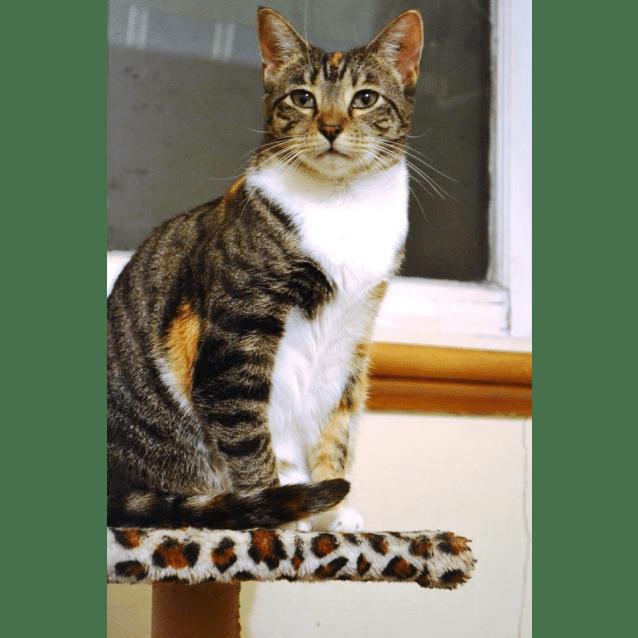 Photo of Au0011 – Roxie