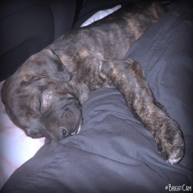 Photo of Mishka *** An Angel Puppy ***