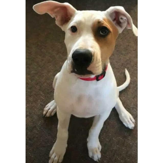Photo of Sookie
