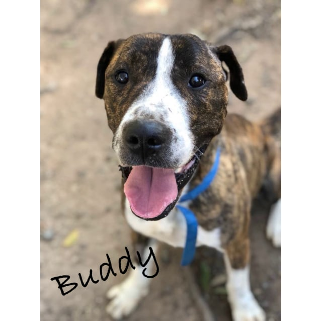 Photo of Buddy