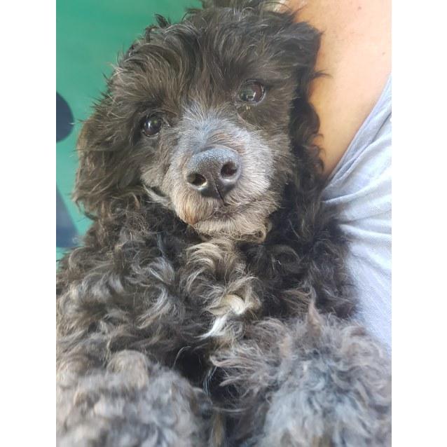 Photo of Moe (Adoption Pending)