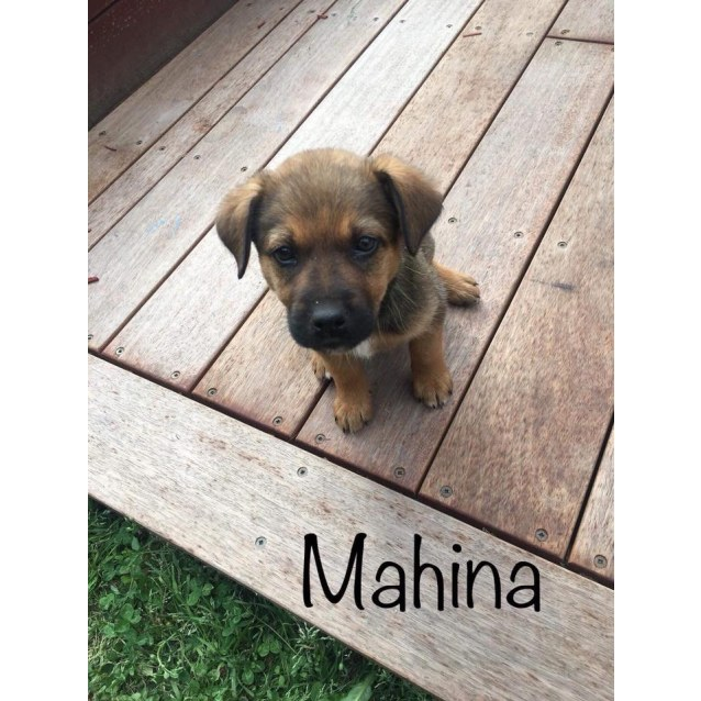Photo of Mahina