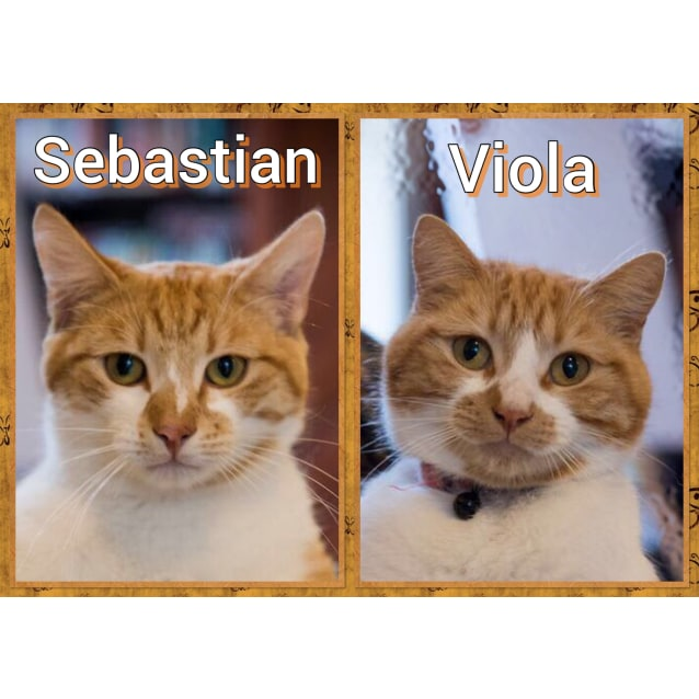 Photo of Sebastian And Viola  *The Shakespearean Twins*